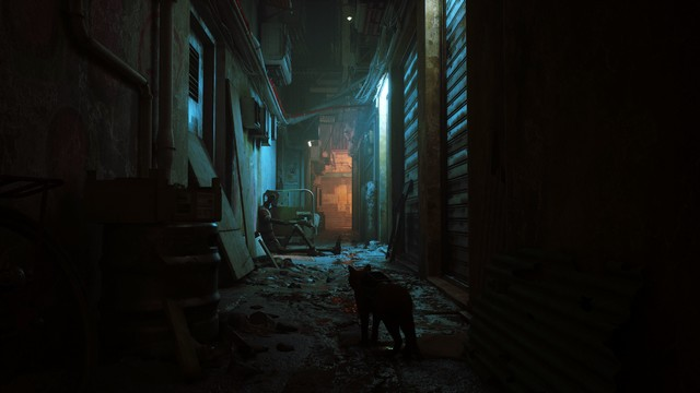 Cat in alley